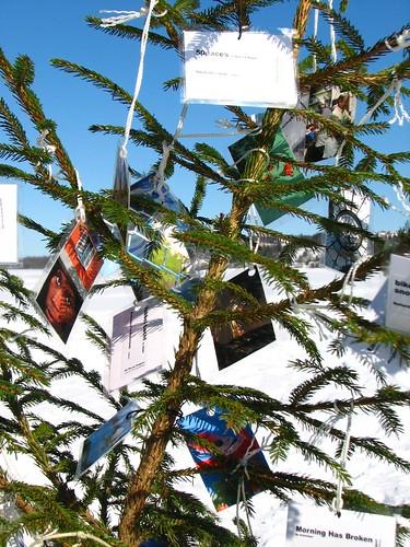 50 Paces Tree 2007