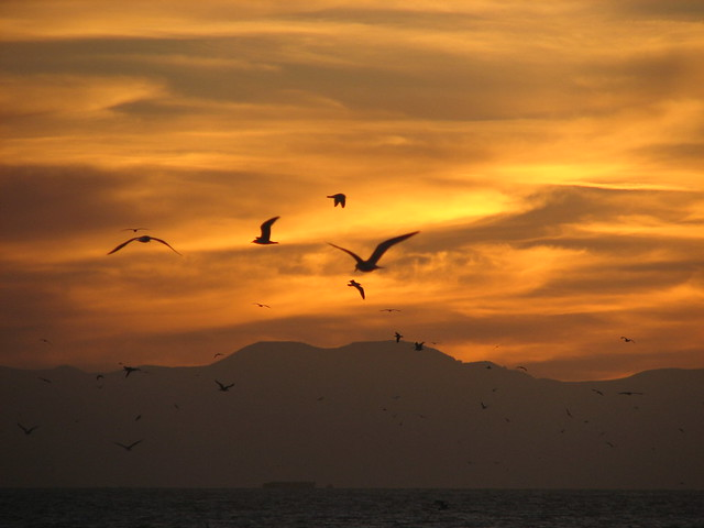 migrating birds against the sunset
