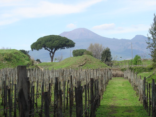 Vesuvius, with an umbrella pine in the foreground. Image courtesy Paull Young.