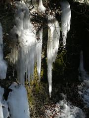 winter, snow, nature, ice, icicle, freezing,