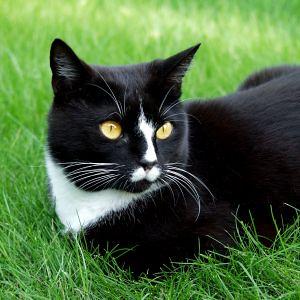 hoe houd ik poepende katten uit mijn tuin katenhond