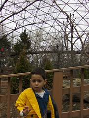 In The Aviary