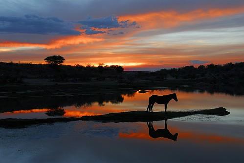 sunset horse color reflection night landscape mexico nikon guanajuato d200 18200mmvr nisargadatta