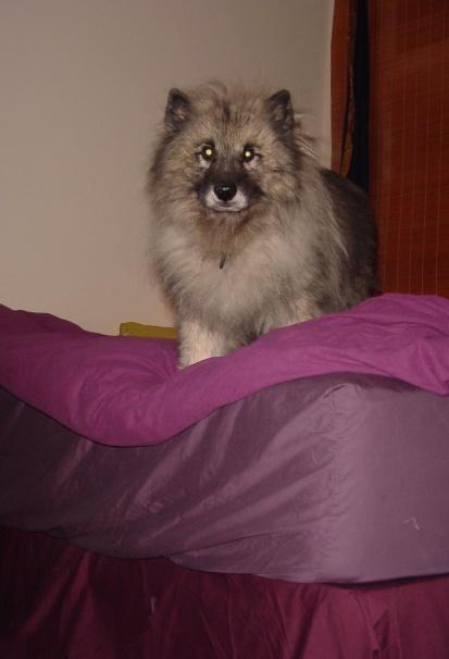 Sam on bed 3