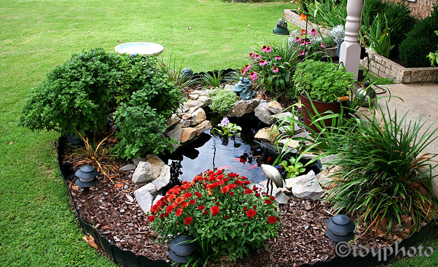 Goldfish pond flickr photo sharing for Outdoor goldfish pond ideas