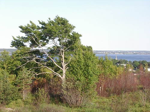 summer canada tree nature water freeassociation novascotia view harbour hill capebreton nuanc