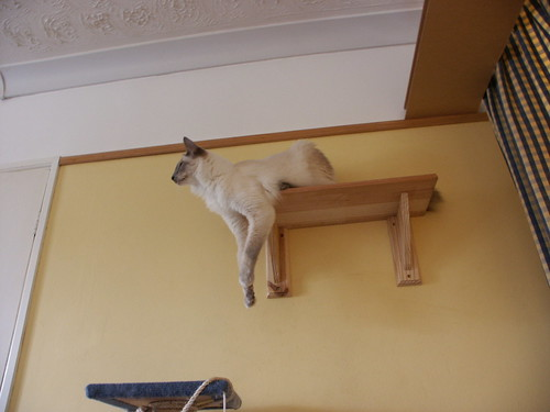cat lounging on a shelf