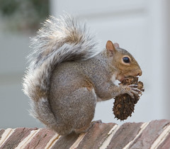IMG_7800: Squirrel