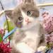 Becky kitten by tabbyoatmeal