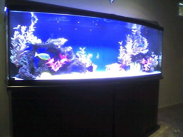 155 gallon bowfront aquarium flickr photo sharing for 150 gallon fish tank dimensions