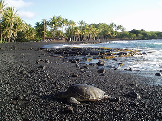 Sea Turtle at Punalu'u | by stevecadman