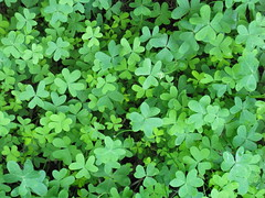 apiales(0.0), flower(0.0), centella(0.0), annual plant(1.0), shrub(1.0), trifolieae(1.0), clover(1.0), leaf(1.0), plant(1.0), herb(1.0), green(1.0), groundcover(1.0),