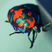 beetle image, photo or clip art