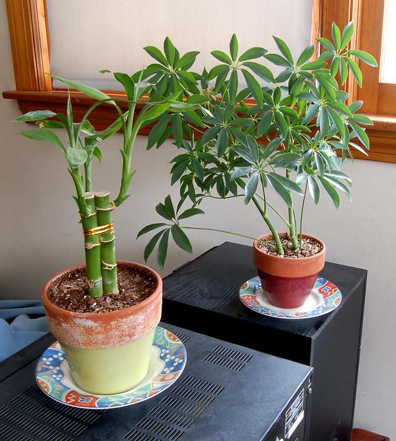 bedroom plants flickr photo sharing