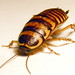 Cockroaches and Termites - Photo (c) Bill & Mark Bell, some rights reserved (CC BY-NC-SA)