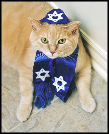 Zak's Cat Mitzvah