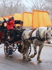 pack animal(0.0), vehicle(1.0), coachman(1.0), horse harness(1.0), horse and buggy(1.0), land vehicle(1.0), carriage(1.0), cart(1.0),