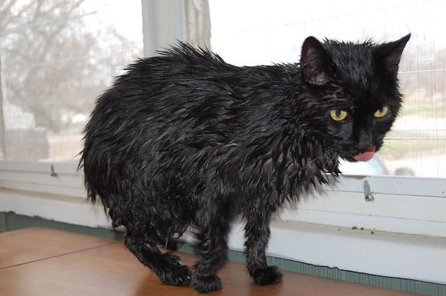 Diy Wet Cat Food Recipes
