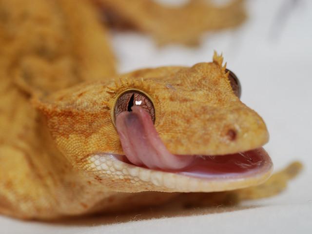 Eye Lick 62