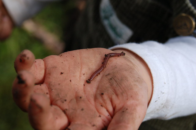 A worm in the hand