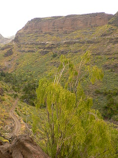 La Fortaleza 的形象. grancanaria geotagged interior south sur inland barranco santalucía lafortaleza balo pendula plocama geo:tool=gmif geo:lat=27883723 geo:lon=15527099
