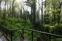 a few hues of green from our back deck    MG 3503