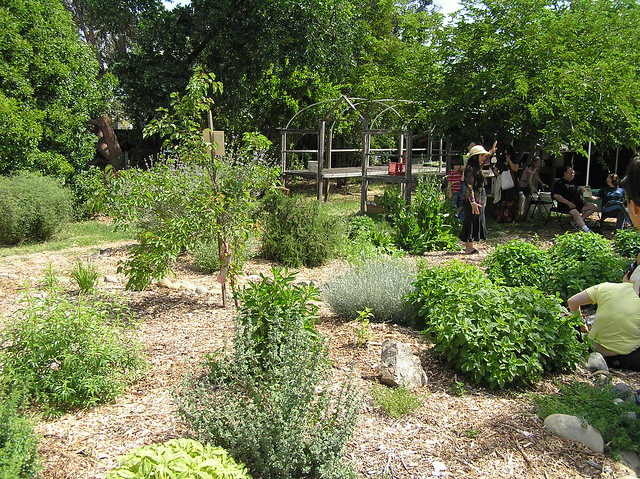 Soil born farm herb garden explore annie john 39 s photos for Soil born farms