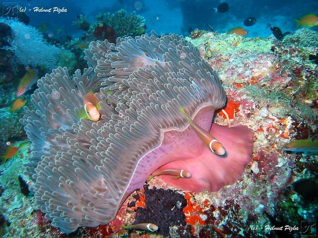 Underwater Wonder