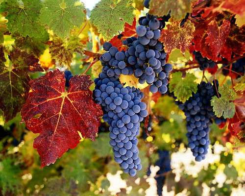 The Colors of Napa Valley