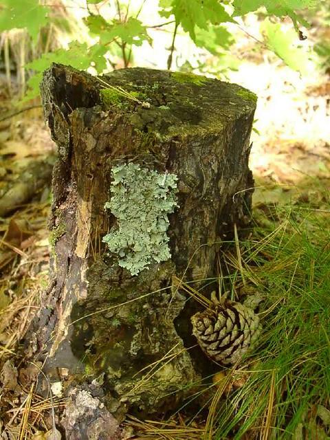 TreeStump&Cone