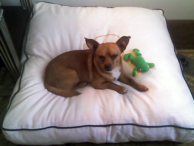 Halo Dog Bed Petco