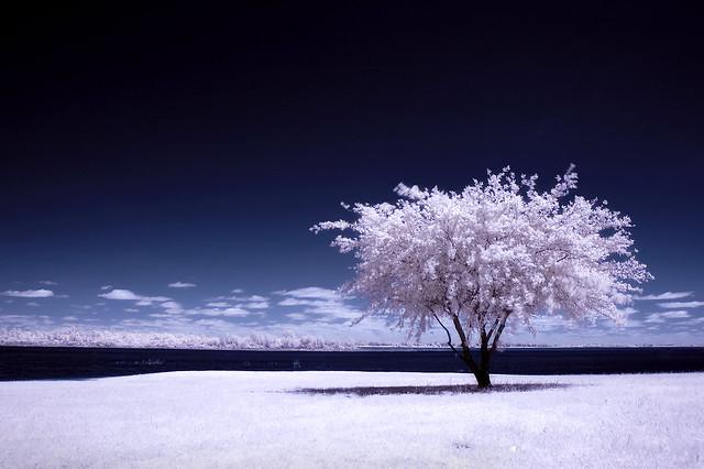a winter summer (infrared)