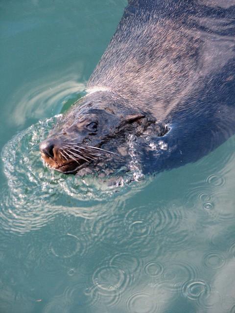 Seal Ass 41