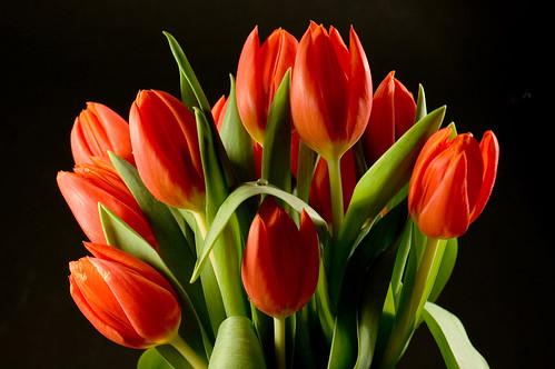 7 romantic flowers that are not roses kremp florist blog