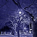 Trees For An Urban Fairy Tale by Jocko B.