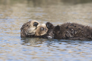 sea-otter-bay_11 | by mikebaird