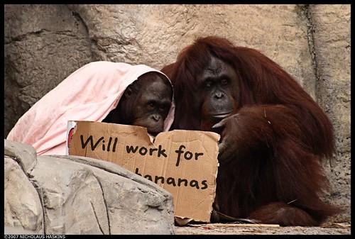 Work for Bananas