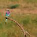 Bird by Bestec1