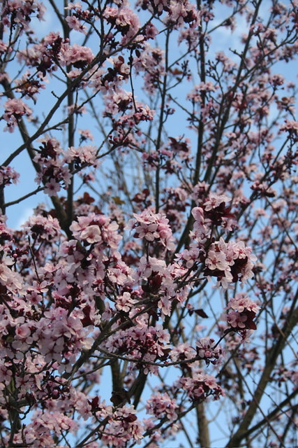 Ornamental Trees For Wisconsin