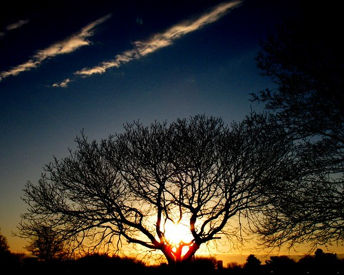 morning sky color tree nature digital sunrise canon photo a620 slickrframe
