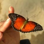 Beautiful Butterfly - Vang Vieng, Laos