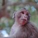 Monkey - Angkor, Cambodia