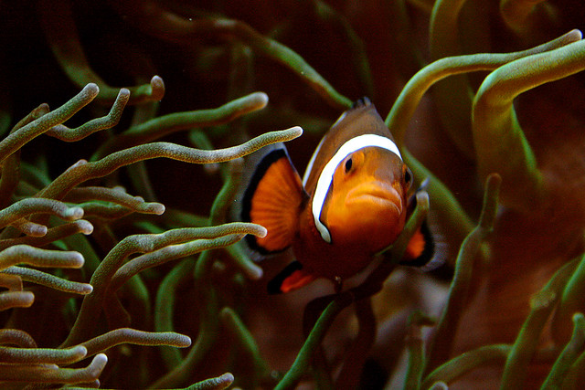 Photographers Who Found Nemo And Photographed It