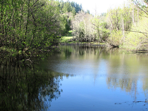 trees water beelerpond brooktrails
