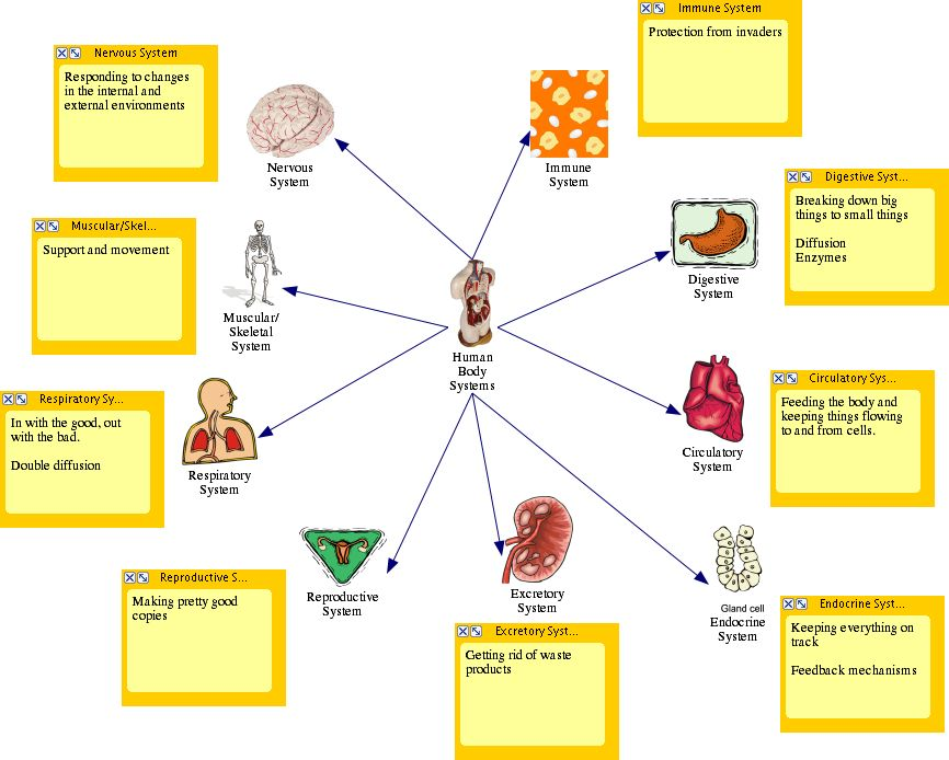 11 human body systems | Human Body System