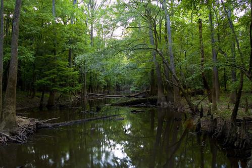 water nationalpark swamp congaree congareenationalpark