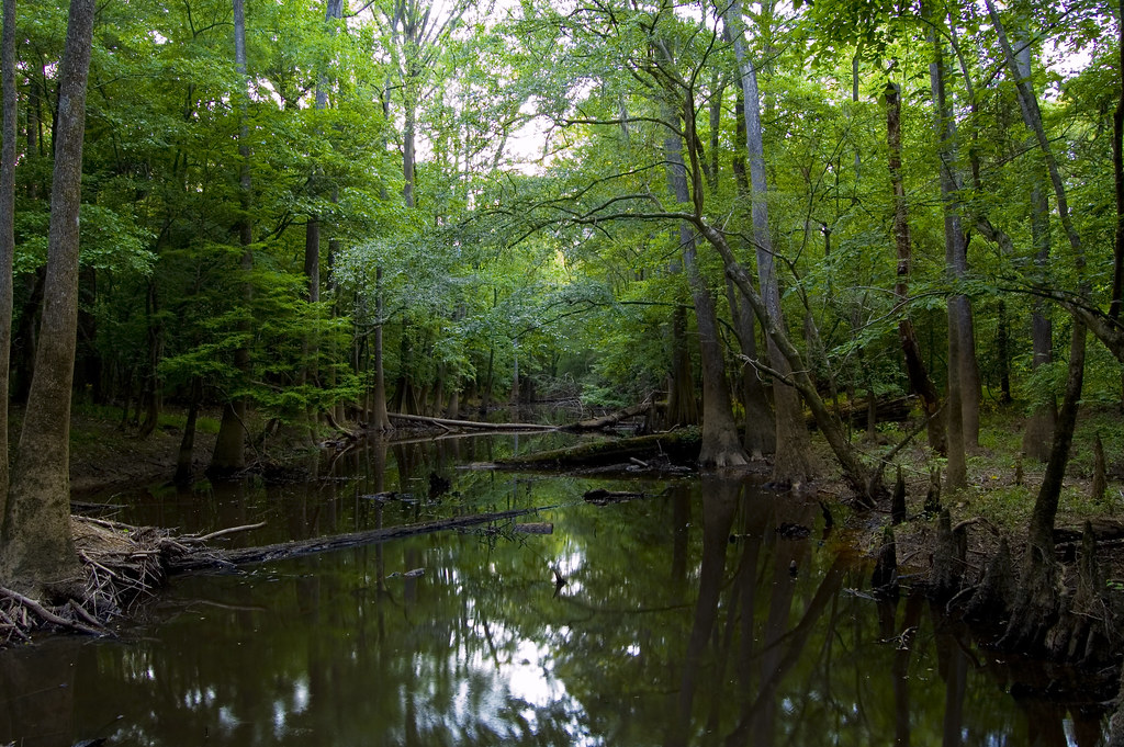 Hotels Near Congaree National Park