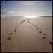 Horse tracks by mclarenjk