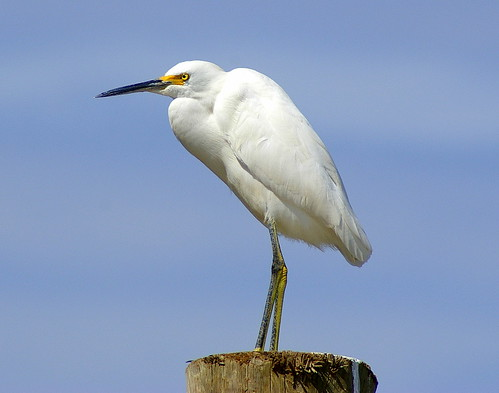 Beautiful Egret...
