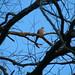 World Peace Wetland Prairie birds